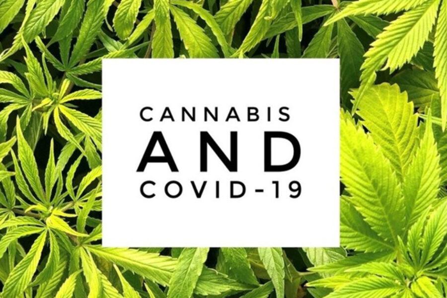 Cannabis Strains – Effective Against Covid-19